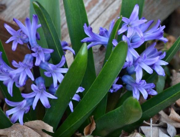 A Pretty Spring Day (8)