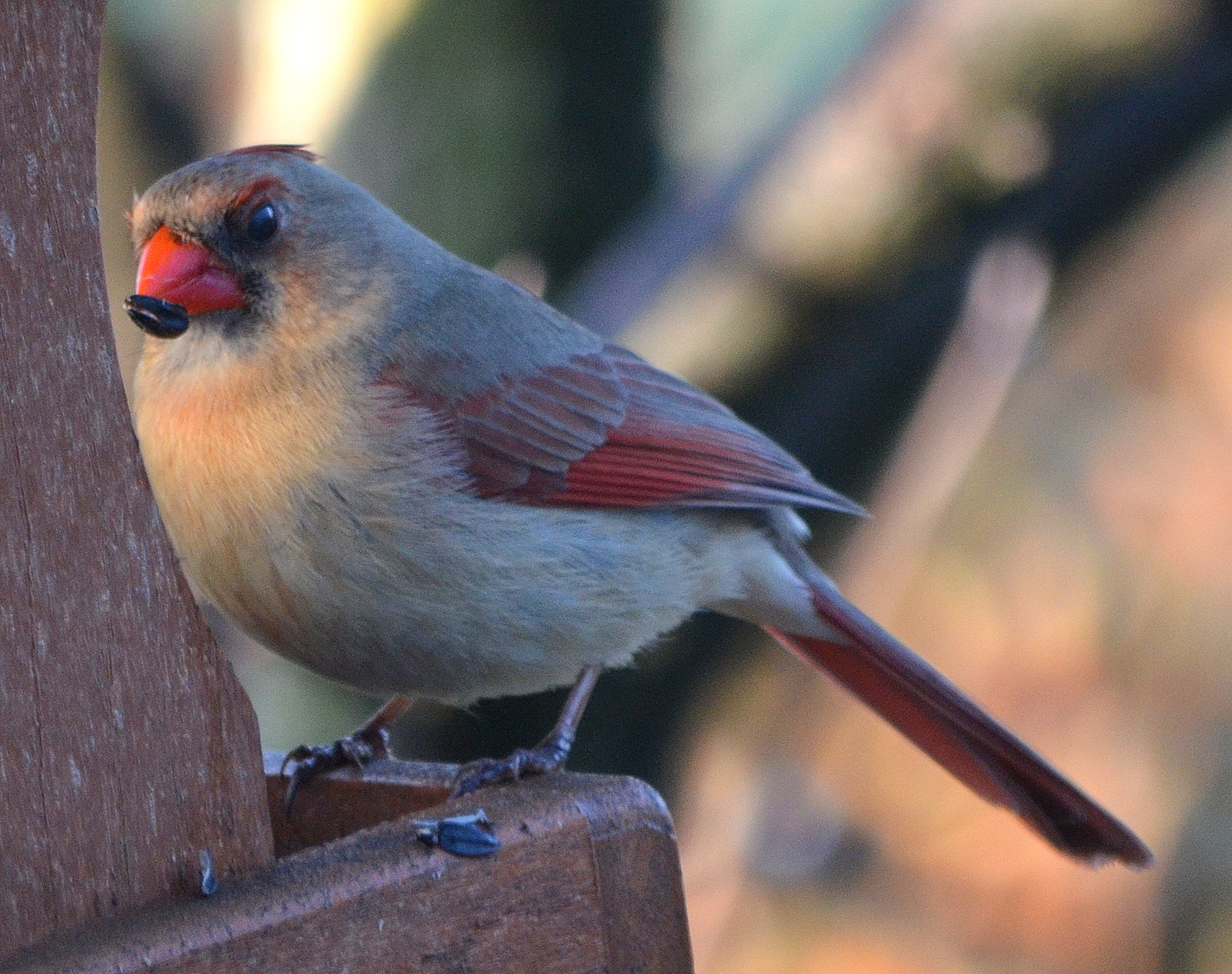 May Is A Great Bird Watching Month In Pennsylvania