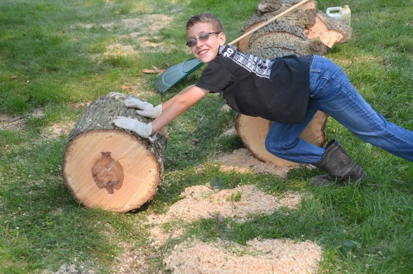 Tree Cutting (28)