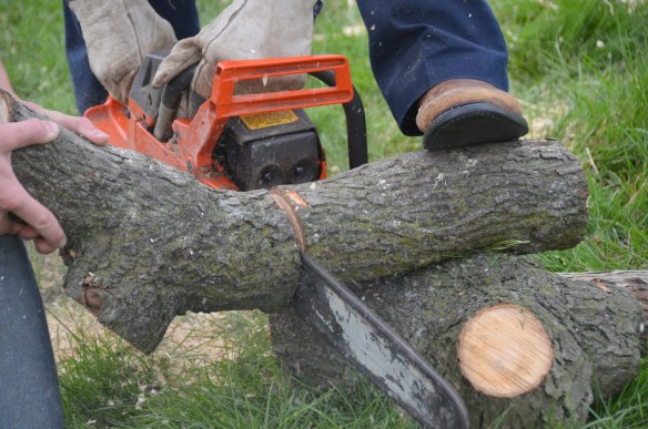 Tree Cutting (44)