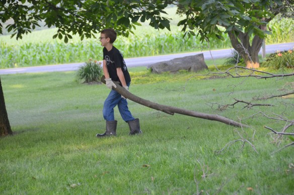 Tree Cutting (9)