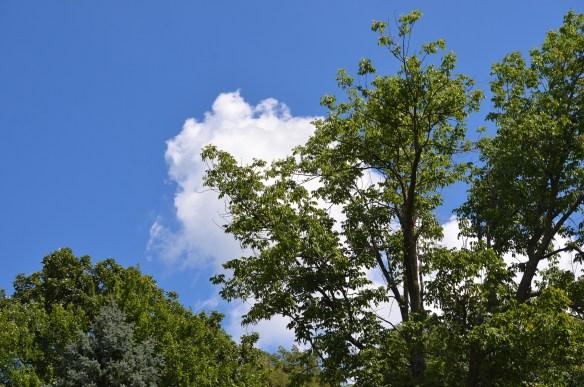 Beautiful Day (1)