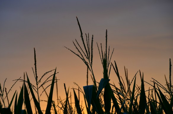 Evening Sky and Sunset (13)