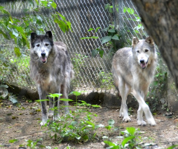 Wolves (15)
