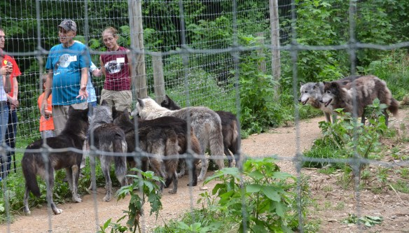 Wolves (23)