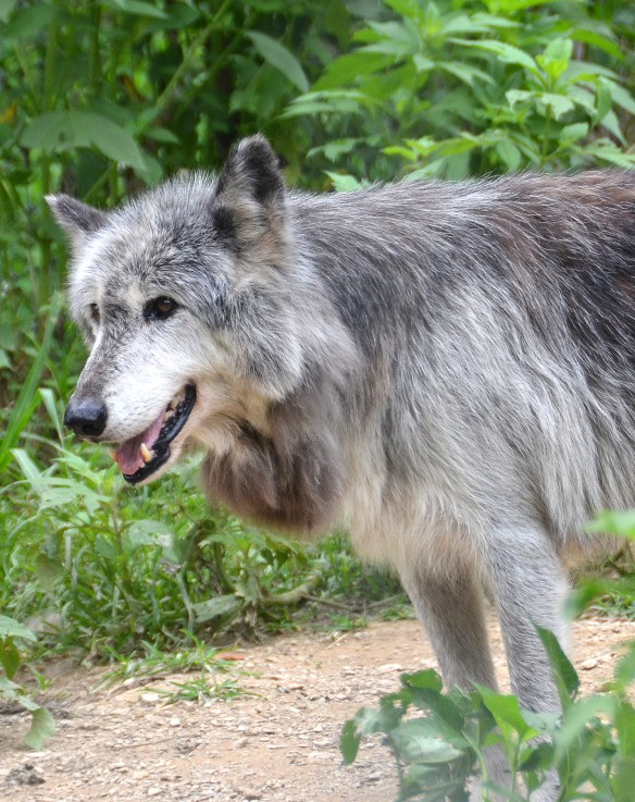Wolves (25)