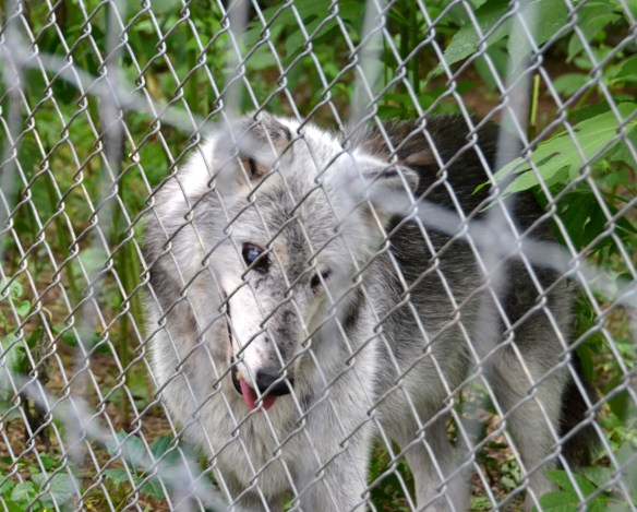 Wolves (29)