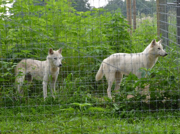 Wolves (38)