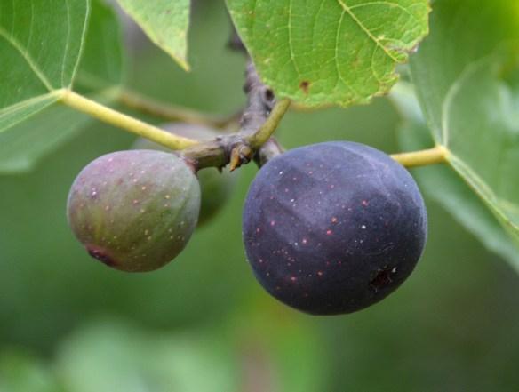 Sam's Orchard (21)