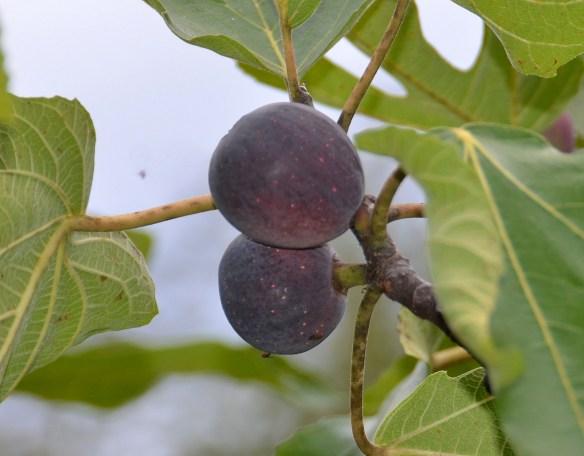 Sam's Orchard (23)