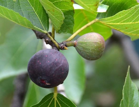 Sam's Orchard (24)