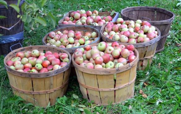 Sam's Orchard (6)