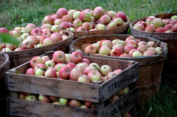 Sam's Orchard (8)