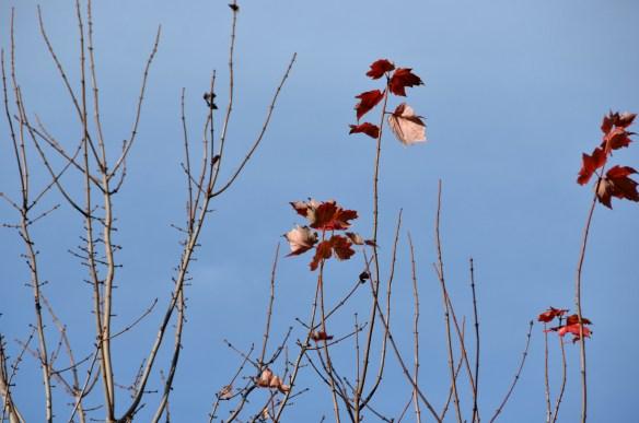 Last flowers and leaves (15)