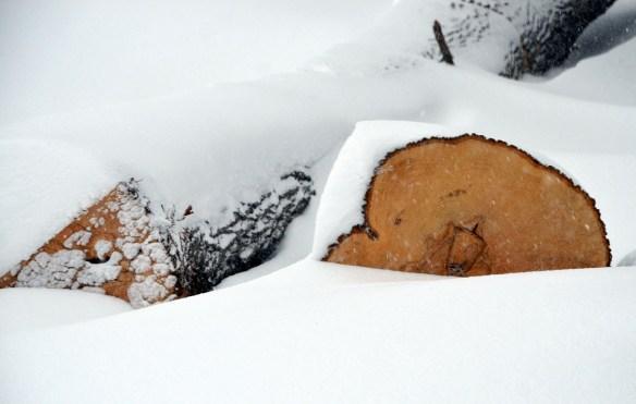 Snow (23)