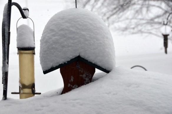 The big snow (14)