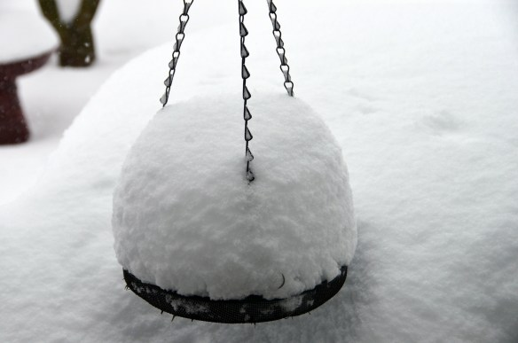 The big snow (15)