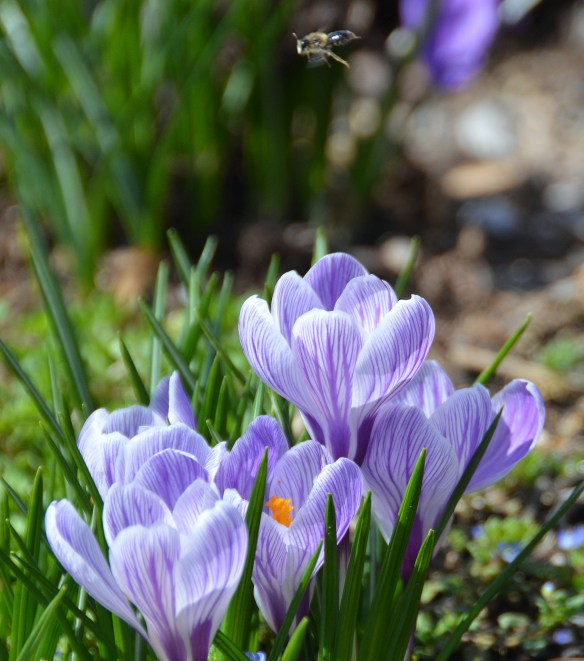 Springtime (7)