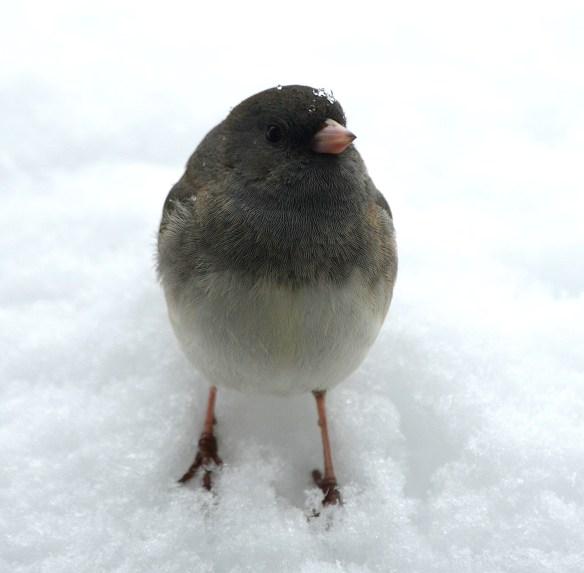 Snow (12)
