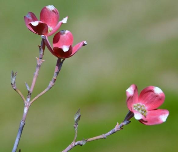 Springtime (19)