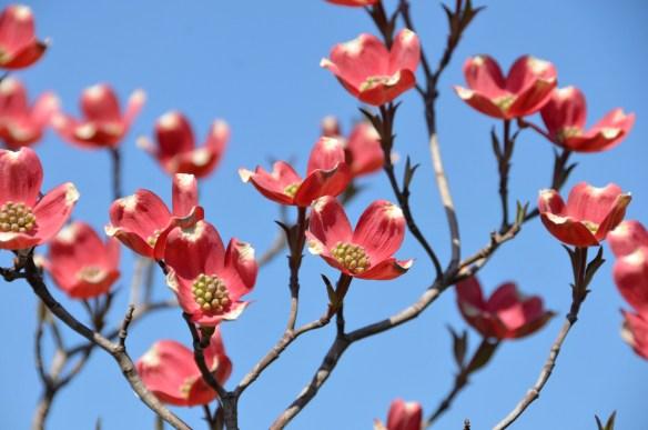 Springtime (20a)