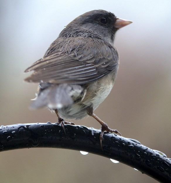 Wed Birds (10)