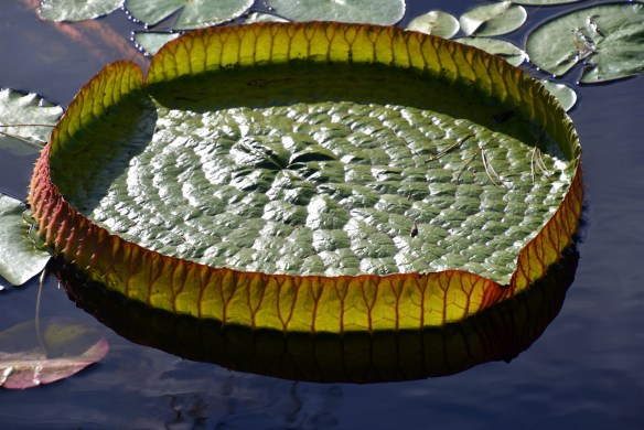 lily-pads-16