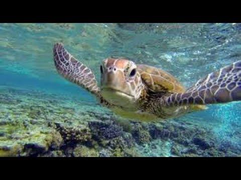 Australia – the Great Barrier Reef