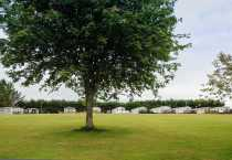 BG-big-tree-in-fron-and-static-caravans