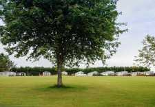 BG-big-tree-in-fron-and-static-caravans