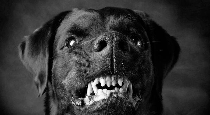 Rottweiler támadt egy emberre