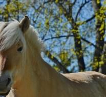 Előadás Piliscsabán: A ló, az ló