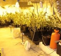 Borospincében termesztették a kábítószert