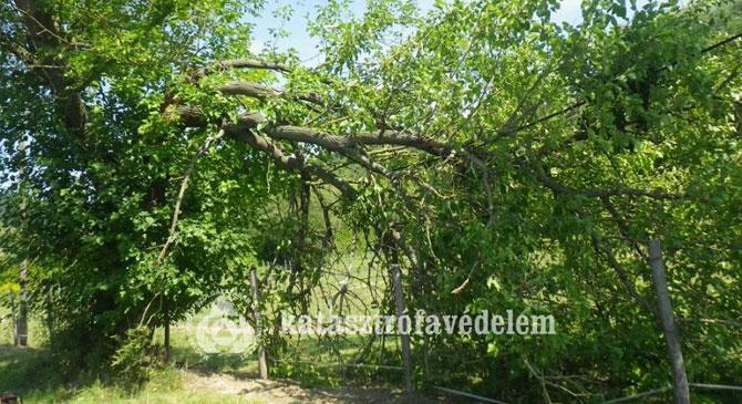 Leszakadt faághoz riasztották a bajnai tűzoltókat