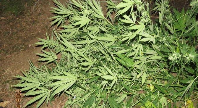 Vádat emeltek a visszaeső kábítószeres ellen