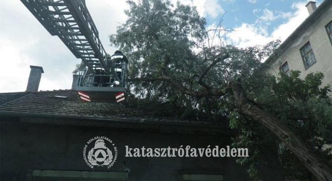 Lakóházra dőlt egy 10 méteres fa Esztergomban
