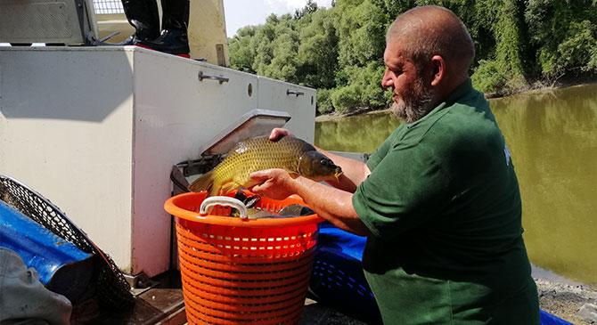 Halakat telepítettek a táti Kis-Duna-ágon