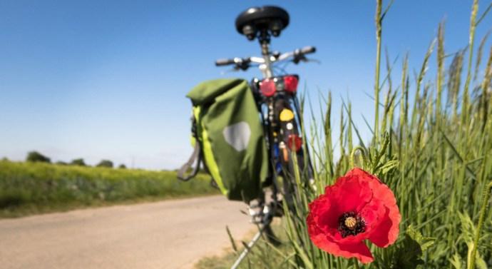 Erdei kerékpárutakat újítanak fel a Pilisi Parkerdőben