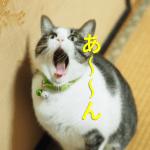 猫の歯磨きや爪切りはどうやるの?口臭がとても気になるんです。