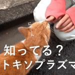 トキソプラズマ症は猫から感染?妊婦が感染すると出産に問題が?どんな症状?