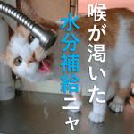 猫が水を飲まないのはナゼ?水を飲ませる方法とは?ご先祖様が関係してる?
