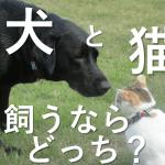 ペットは犬と猫どちらが飼いやすい?迷惑かけないのはどっち?どろ猫日記総集編①