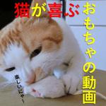 猫のおもちゃはねずみが一番?レーザーポインタを買ったら大喜びで遊ぶ?どろ猫日記第13回目