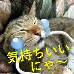 猫が喜ぶ撫で方やタイミングは?疲れずに楽に撫で続ける方法とは?