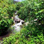 River going through the DYZC yoga retreat center near San Pedro Guatemala