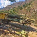 Bamboo for construction of the new dining deck just arrived to Doron Yoga & Zen center in Tzununa