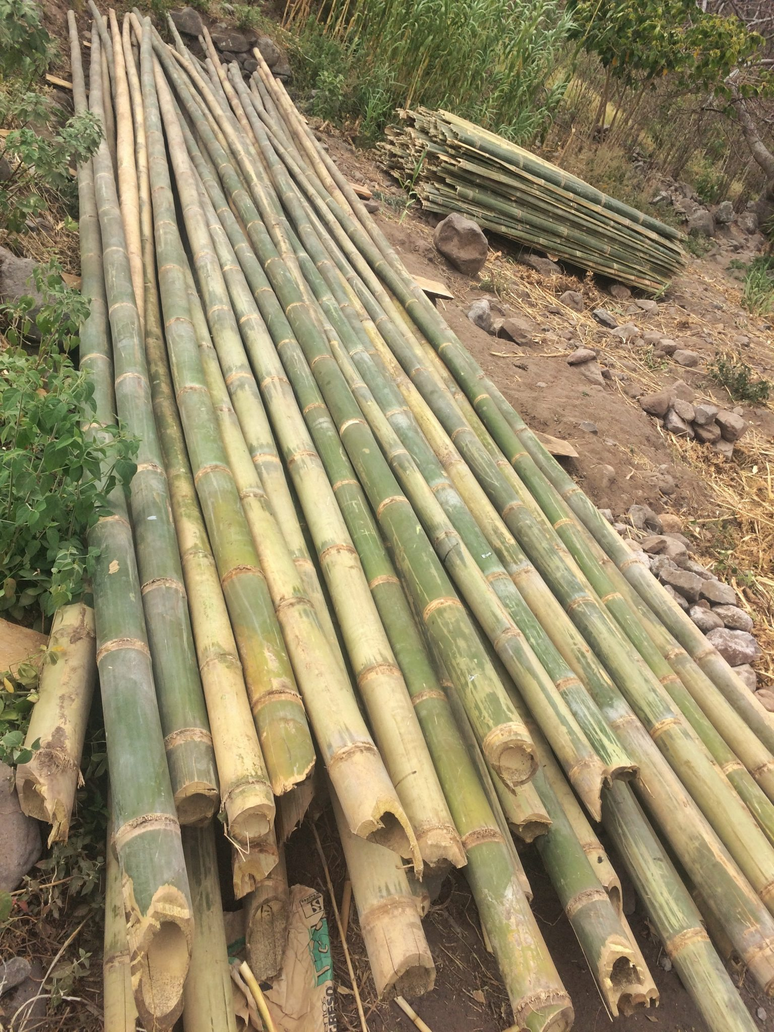 Stacks of bamboo for eco construction in our yoga retreat center ...