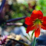 Beautiful flower from Doron Yoga & Zen Centera gardens no. 2