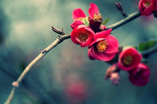 springtime pg 001