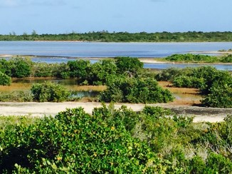 This is the view from Flamingo Pond Lookout, the flamingos (that you can barely see) are across the pond on Anegada, BVI. (photo by dorothyadele)